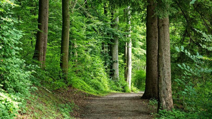obračun doprinosa za šume